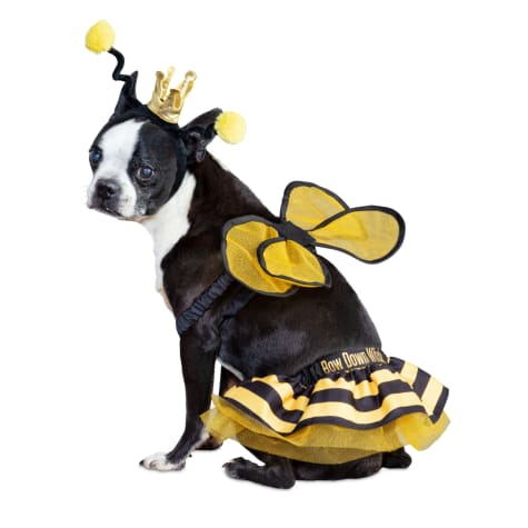 Bootique Bee Royalty Pet Costume