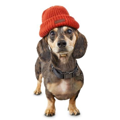 Reddy Orange Dog Beanie