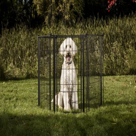 Carlson Pet Products Outdoor Extra Tall Super Wide Pet Pen and Gate