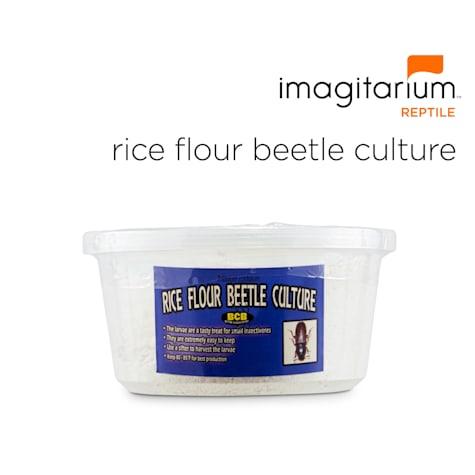 Rice Flour Beetle Culture 4-Pack
