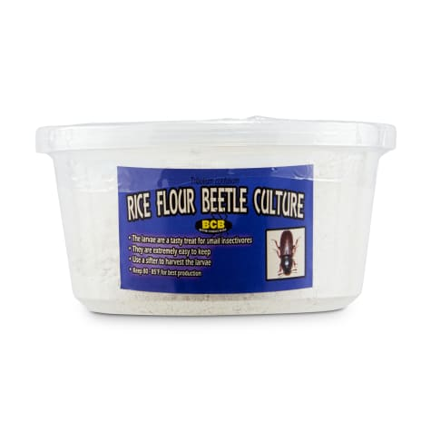 Rice Flour Beetle/Isopod Culture 4-Pack