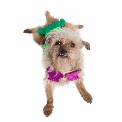 Pet Krewe Mermaid Costume for Dogs