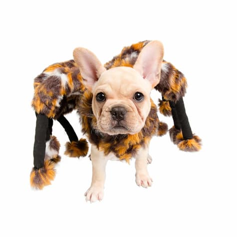 Pet Krewe Spider Costume for Pets