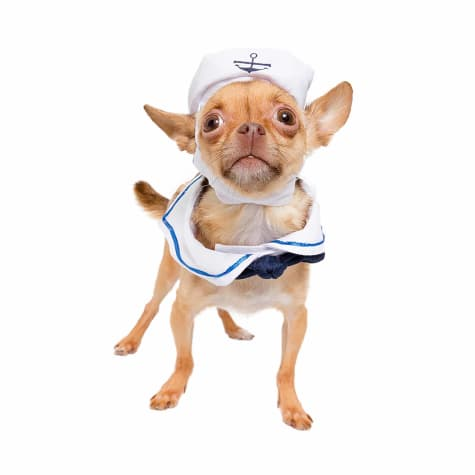 Pet Krewe Sailor Costume for Pets