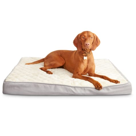 Deals on Harmony Gray Orthopedic Lounger Dog Bed 40-inch X 30-inch