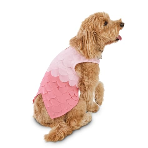Bond & Co. Ombre Chiffon Mermaid Dog Dress