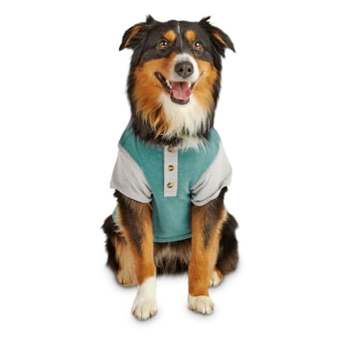 Reddy Teal & Grey Colorblocked Jersey Dog Henley T-Shirt