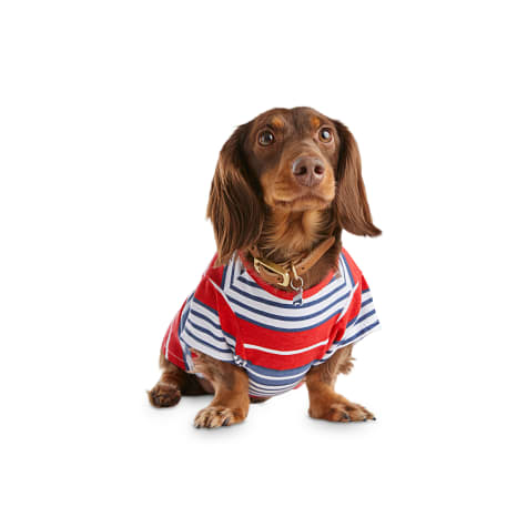 Bond & Co. Stripe A Pose Nautical Dog T-Shirt