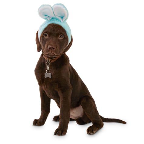 Bond & Co. Blue Bunny Bonnet Dog Hat