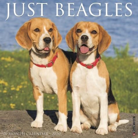 Willow Creek Press Beagles 2020 Wall Calendar