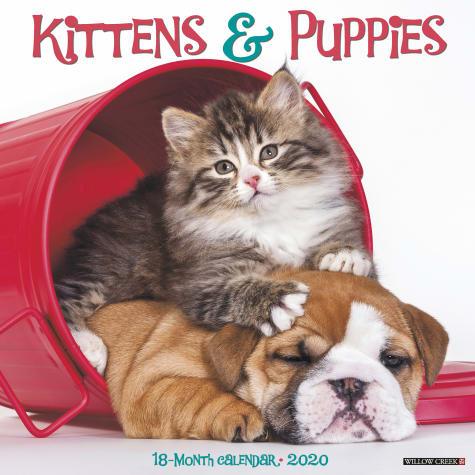 Willow Creek Press Kittens & Puppies 2020 Wall Calendar