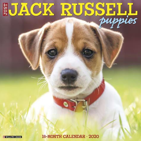 Willow Creek Press Jack Russell Puppies 2020 Wall Calendar