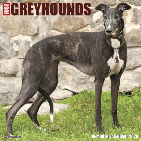 Willow Creek Press Greyhounds 2020 Wall Calendar