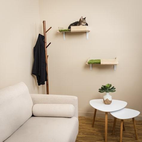 petco cat shelves