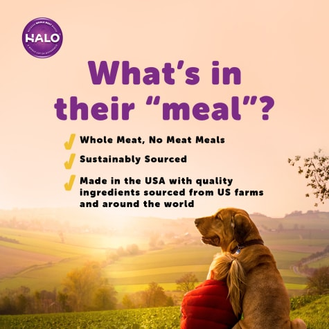 Halo Holistic Beef Recipe Canned Dog Food