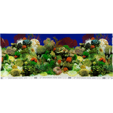 Petco Double Sided Coral and Rainforest Aquarium Background