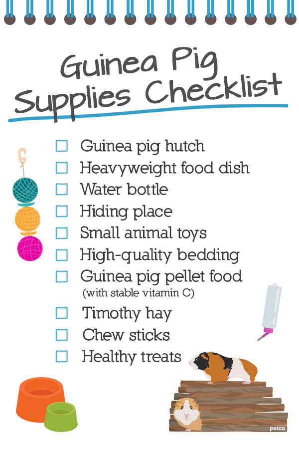 guinea pig supplies list