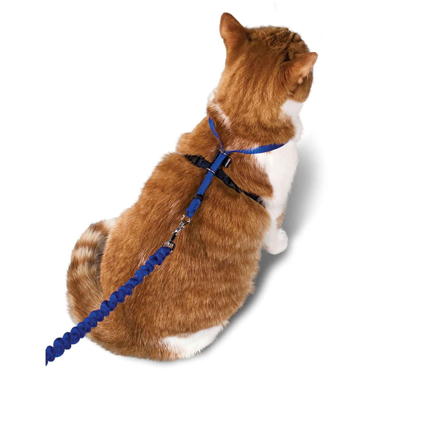 With Me Kitty Harness Bungee Leash