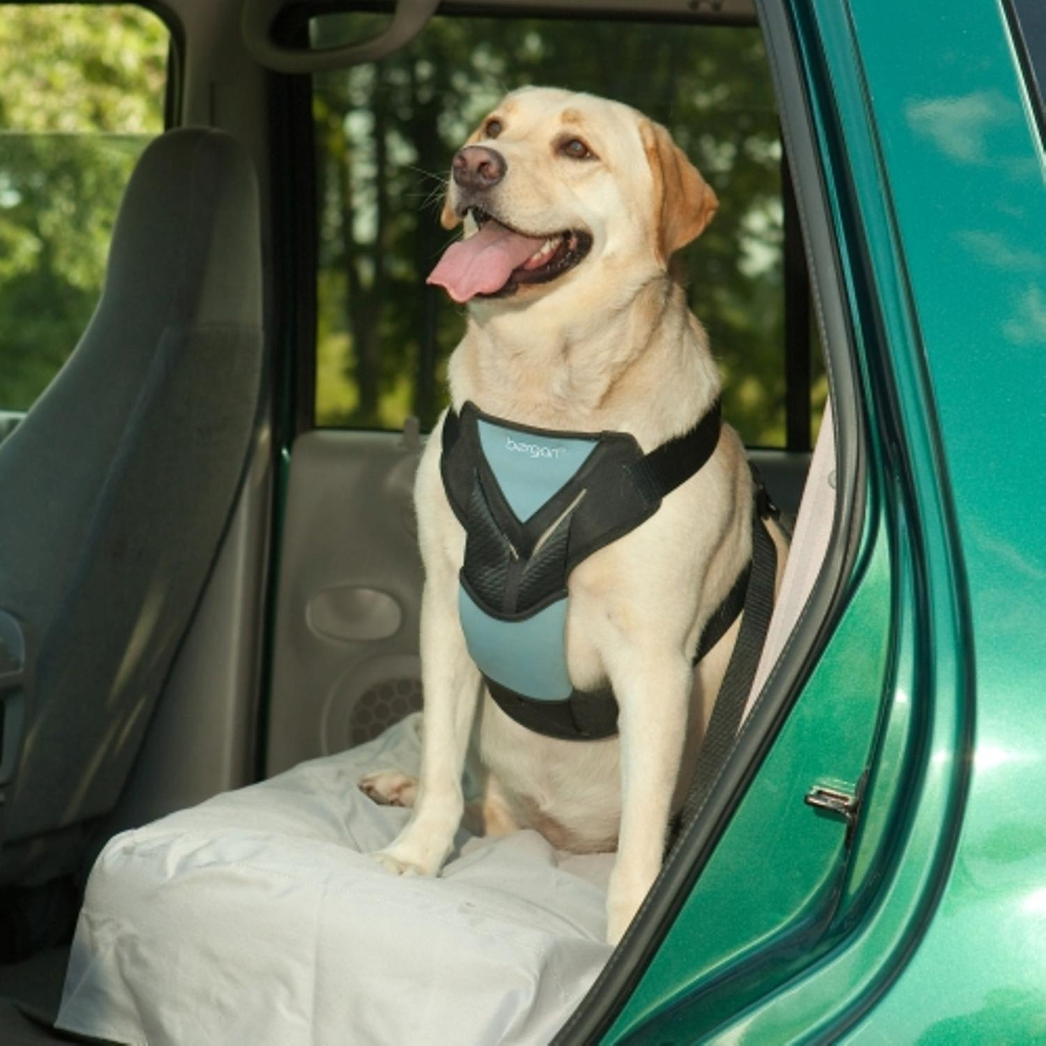 Bergan Auto Harness With Tether Dog Car
