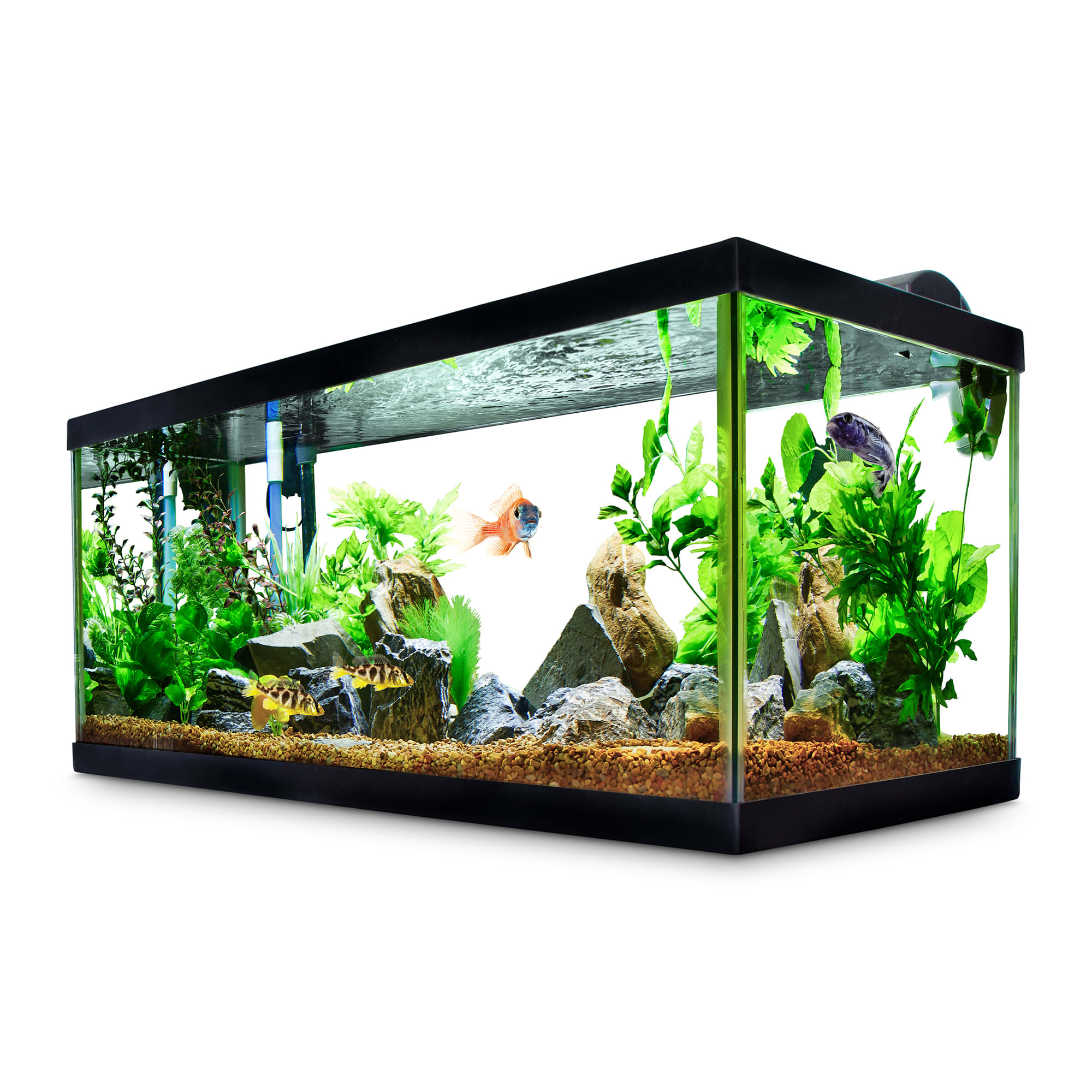 Aqueon Standard Glass Aquarium Tank 40 Gallon Breeder | Petco