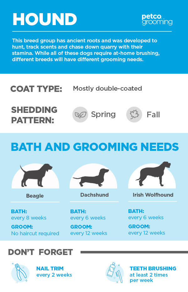 Grooming - Hound
