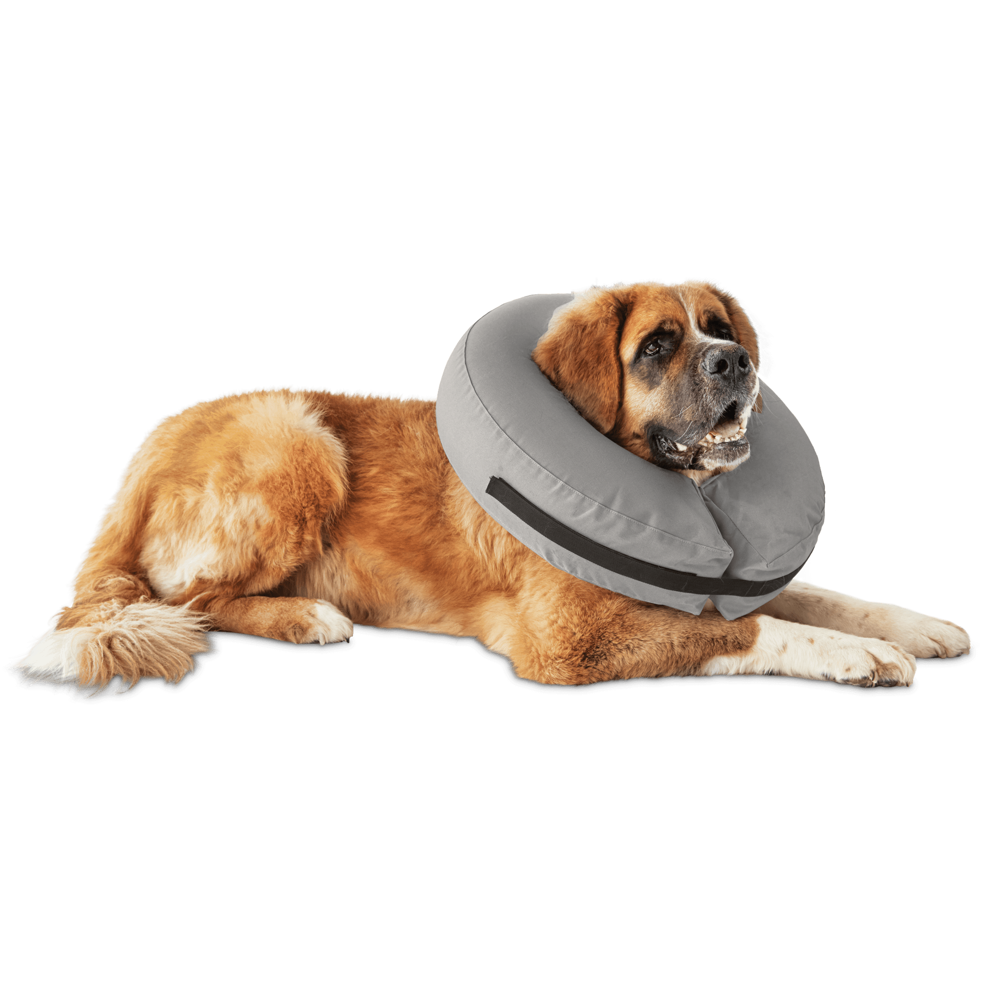 The Well & Good Inflatable Collar for Dogs and Cats creates a comfortable barrier inhibiting your pet from aggravating their wounds. Its rounded and unobtrusive design allows your dog a wide field of vision so they can comfortably heal.