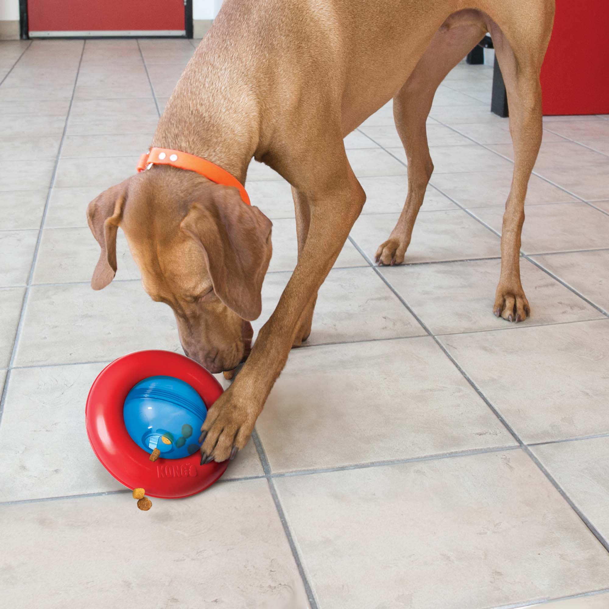 kong puzzle feeder for dog