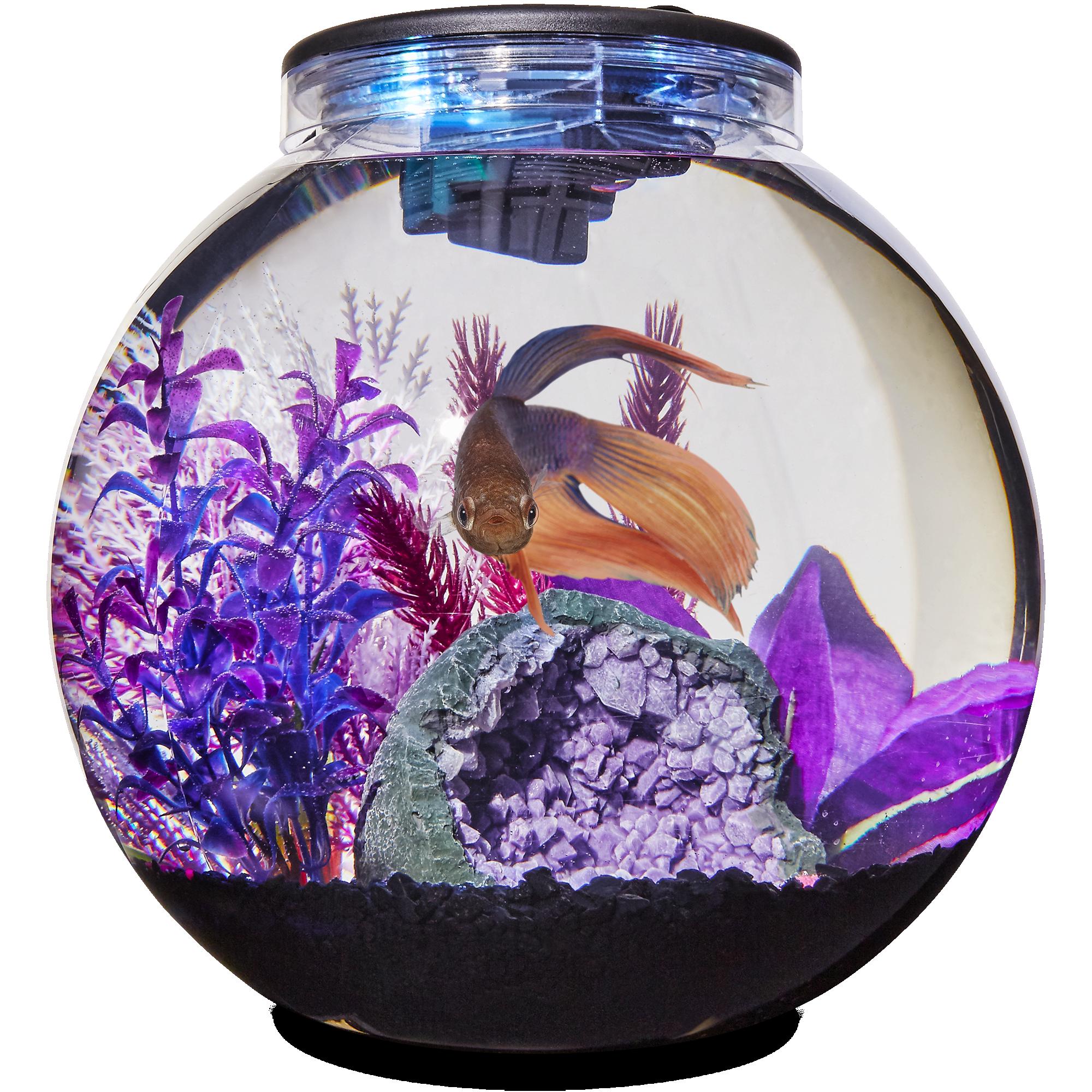 Imagitarium Freshwater Globe Kit 3 1 Gal Petco