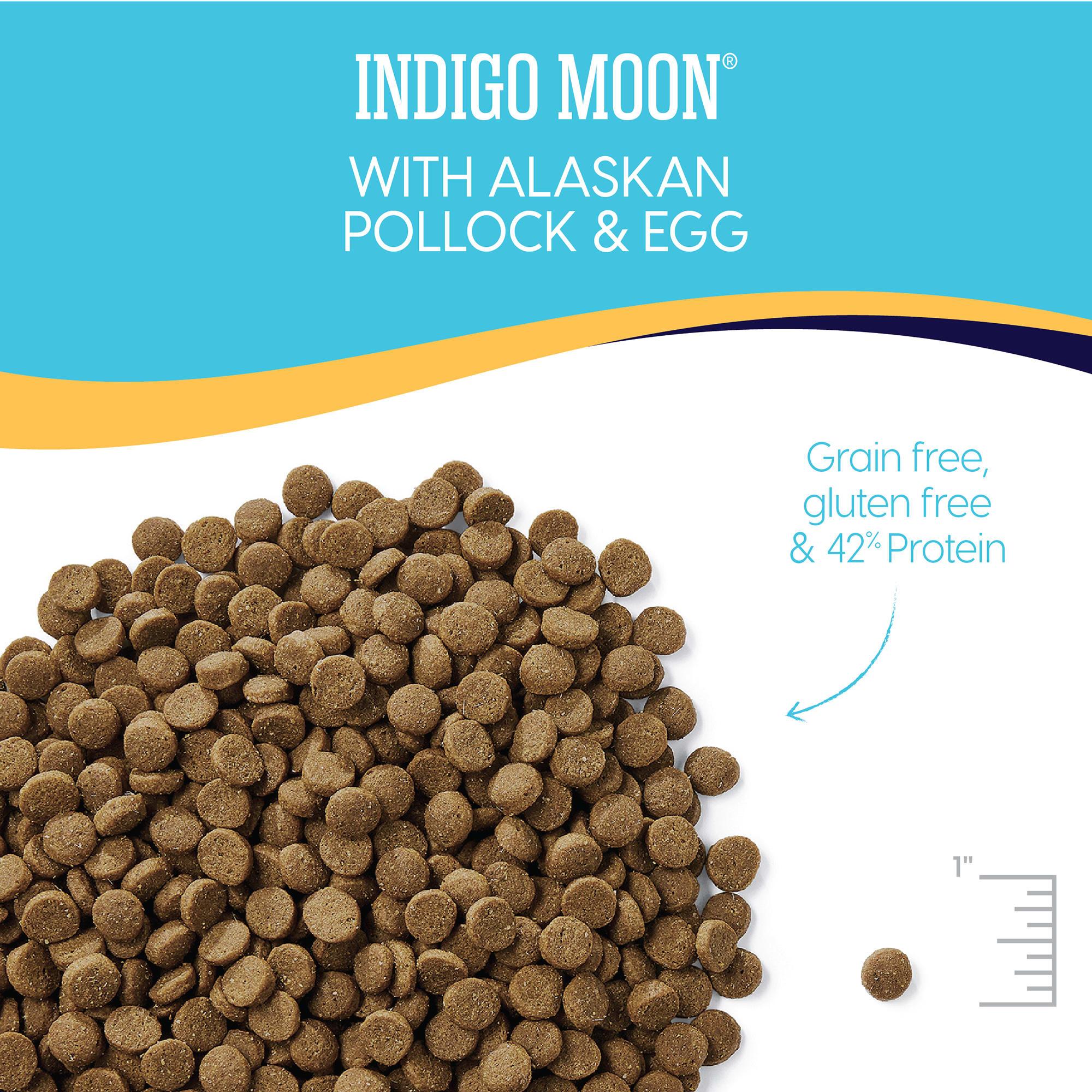 food Indigo cat moon adult