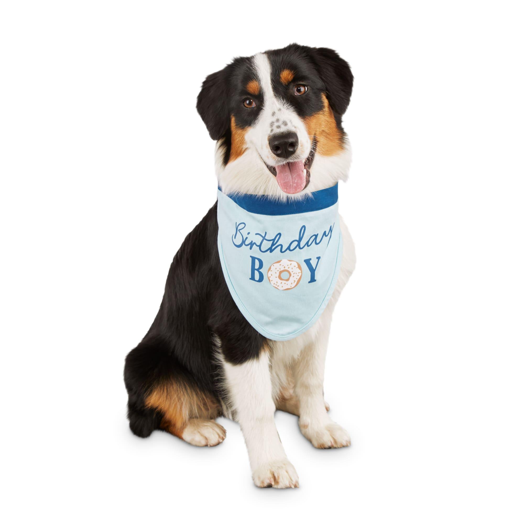 Bond Co Birthday Boy Dog Bandana Small Medium Petco