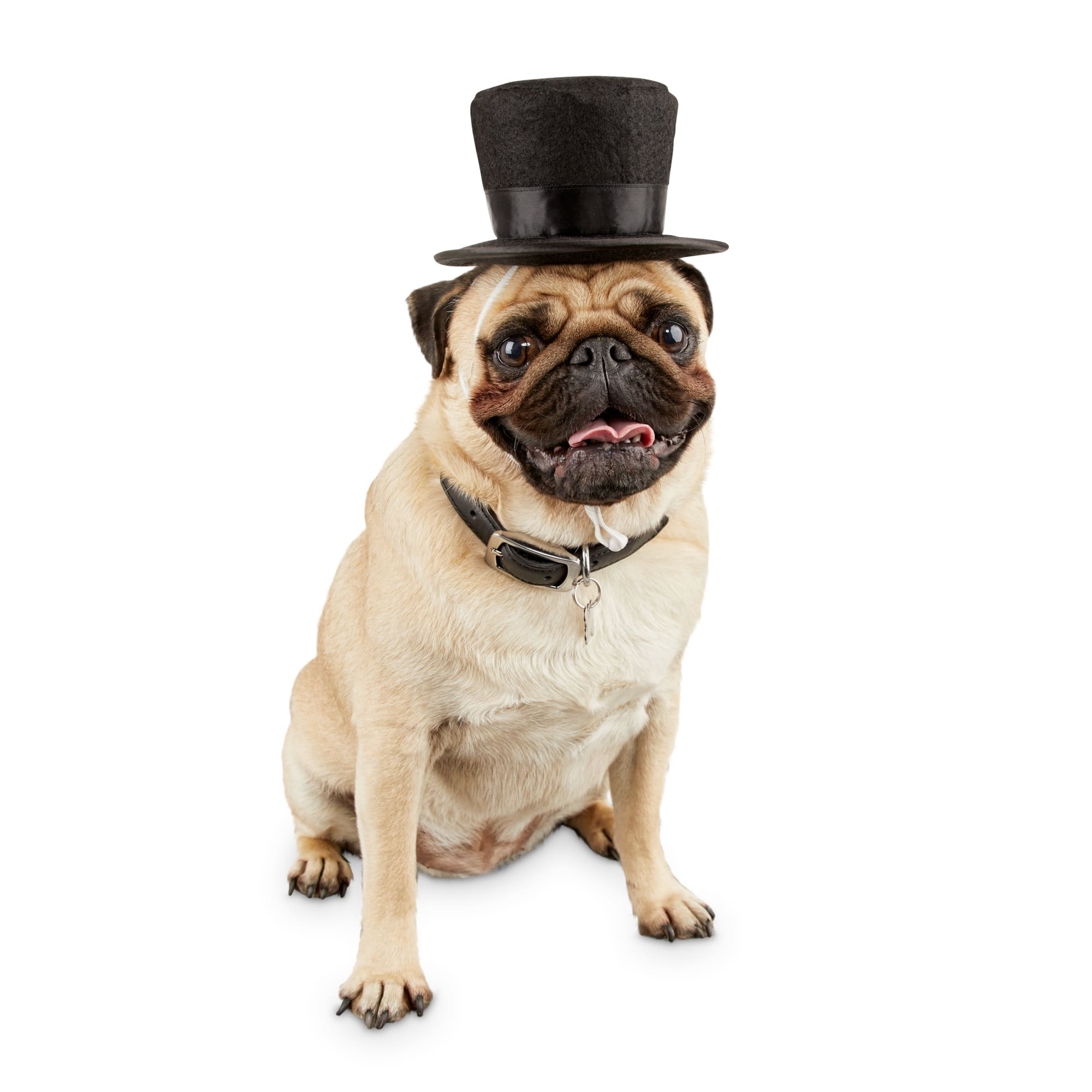 Bond \u0026 Co. Dog Top Hat, Small/Medium