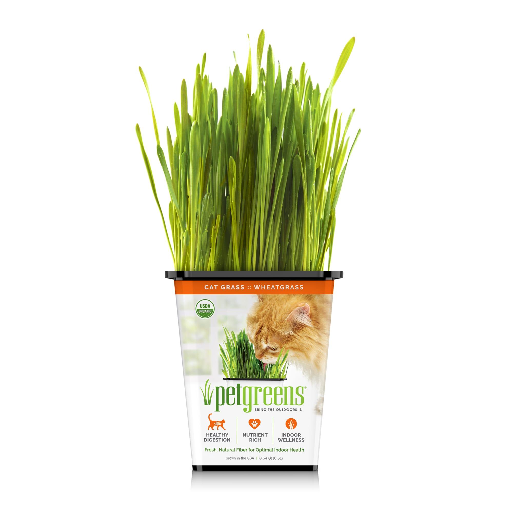 cat grass how to grow