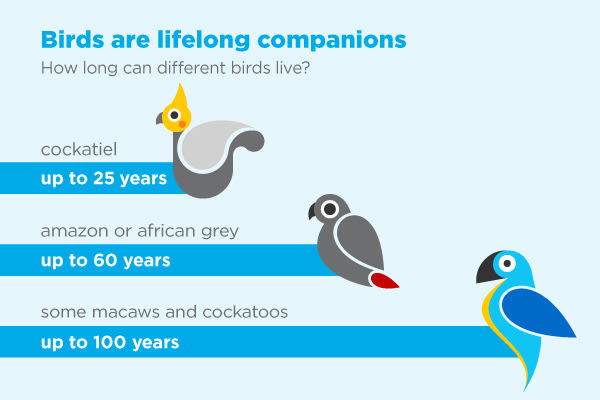 bird lifespan