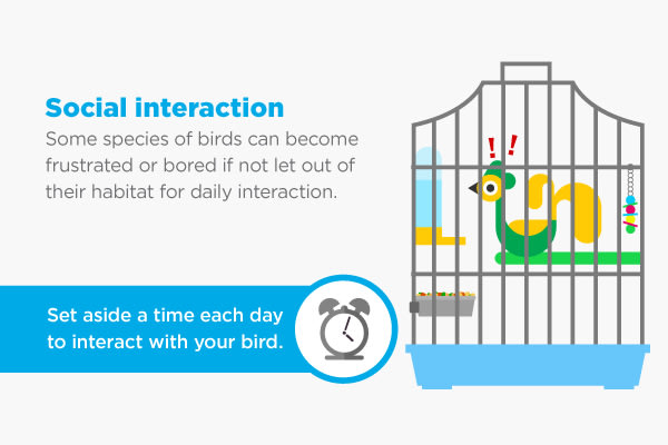 bird social interaction