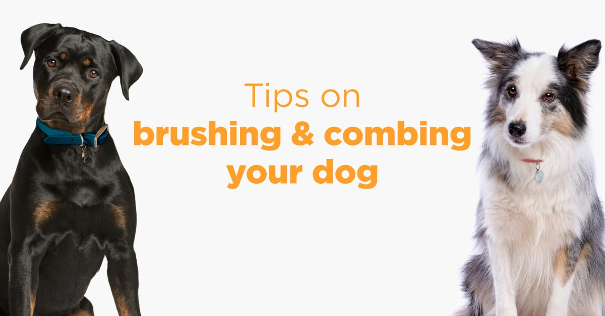 Tips on brushing and combing your dog