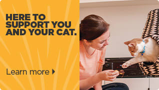 Here to support you and your cat - Learn More