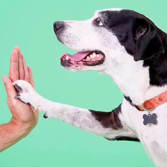 dog knee brace petco