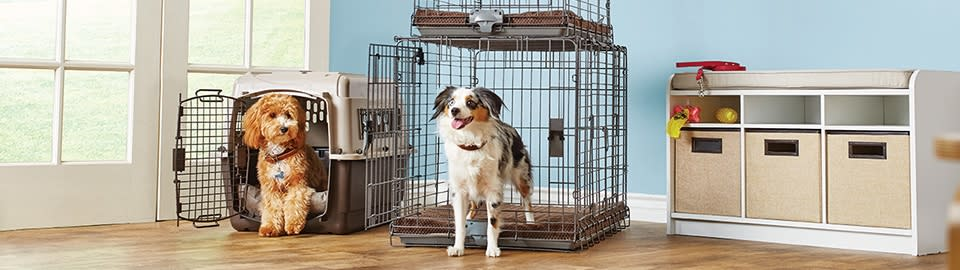 Puppy And Dog Crate Training Petco