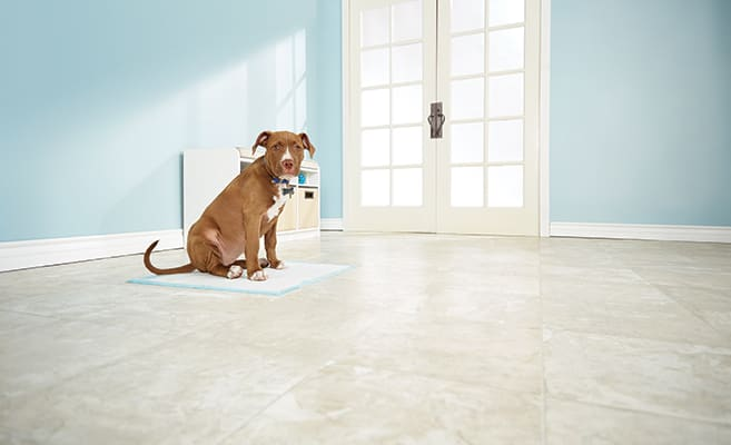 How to Potty Train a Puppy: Tips for New Pet Parents | Petco
