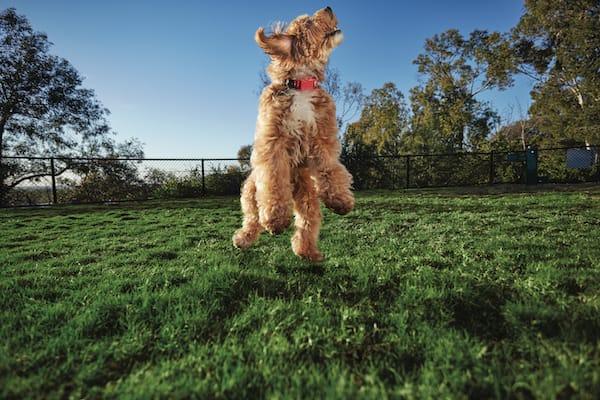 dog outside in park