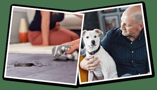 Dog Puppy Training Classes Petco