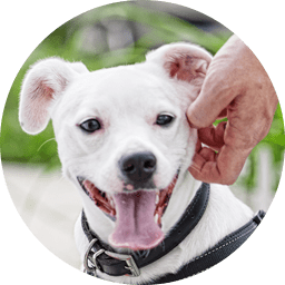 Dog Puppy Supplies Services Accessories Petco