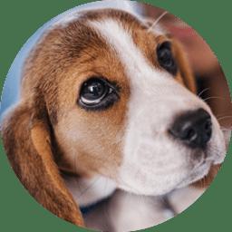 Dog Puppy Supplies Services Accessories Petco