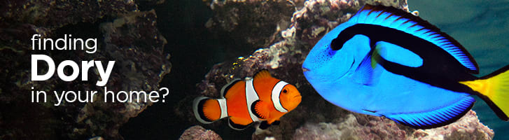 finding Dory in your home?