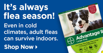 It's always flea season - Even in cold climates, adult fleas can survive indoors - Shop Now