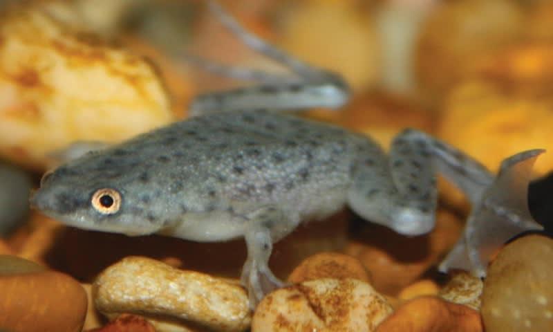 Freshwater Amphibians Petco
