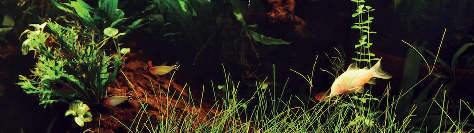 Freshwater Aquarium Plant Care Tips Petco
