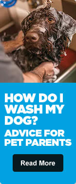 How Do I Wash My Dog? - Read More
