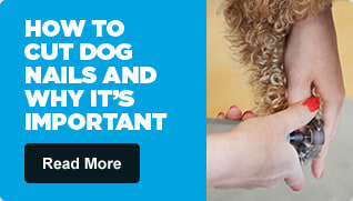 How to Cut Dog Nails and Why It's Important - Read More