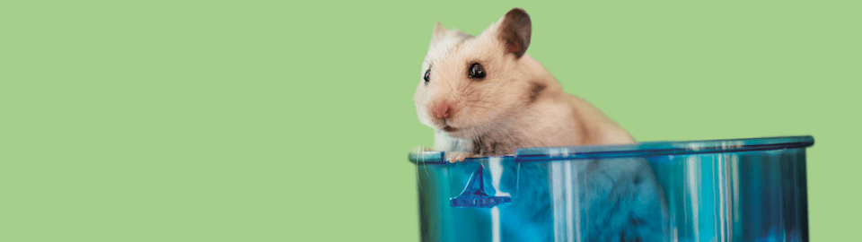 How To Properly Clean Your Hamster And Hamster Cage Petco